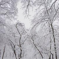 Все в белом ... :: Лариса Корженевская