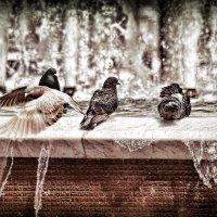 Птицы у воды :: Boris Khershberg