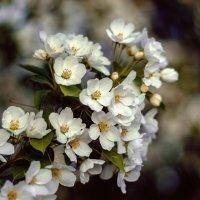 Весна... :: Леся Гуфраева