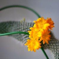 Из коллекции кактусов одногог мальчика :: Владимир Агафонов