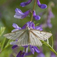 Та бабочка,слетевшая с небес, была так трогательно невесома :: Наталья Димова