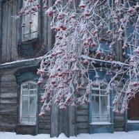 Старый дом и рябина :: Галина Козлова