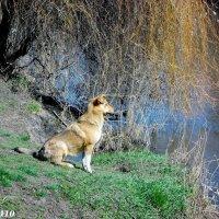 Релаксация с видом на реку :: Нина Бутко
