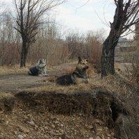 В дозоре. :: Nikolay Svetin