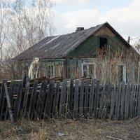 На страже :: Nikolay Svetin