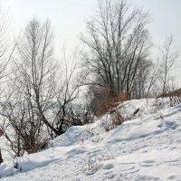 Берег у реки :: Олег Афанасьевич Сергеев