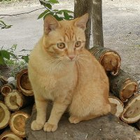 Рыжий кот :: Марина Чайкина