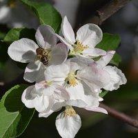 Весна... :: Anna Gornostayeva