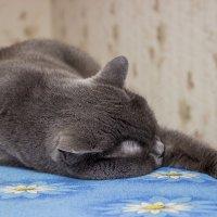 Спят усталые ... :: Михаил Юрин