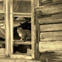 Грустный котик в развалинах :: Валерия Яскович