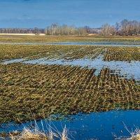 Затопленное поле :: Любовь Потеряхина