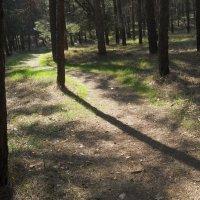 Свет и тень или На лесной тропинке :: Галина