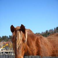 Рыжий конь :: Алексей Екимовских