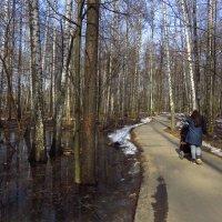 Весна года и весна жизни :: Андрей Лукьянов