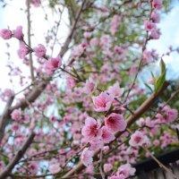 Весна :: Марина