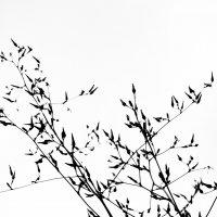 Grass :: Ekat Grigoryeva