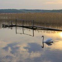 Закат. Браславские озера. :: Татьяна