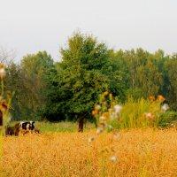 Сельская жизнь :: Анна Хотылева