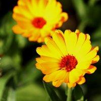Цветы :: Olga Moskvitina