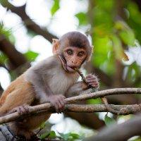 Мелкий обезьян :) :: Roman_