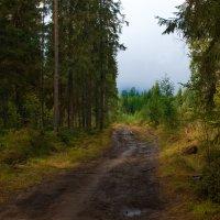 в лесу :: Наталья Ремини
