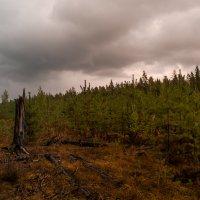 над лесом :: Наталья Ремини