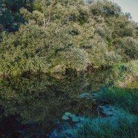 Ро́славль. река Остёр :: Павел Данилевский