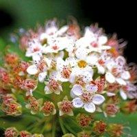 цветок :: Сергей О'бабкин