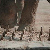Это просто слоны. :: Владимир Шлосберг