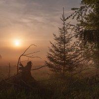Туманный рассвет :: Оксана Ермихина
