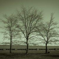 Три одиноких дерева :: Pavel Kiselev