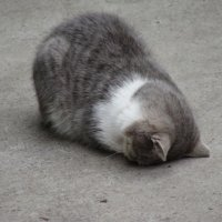 и все таки же любят коты спать где попало)) :: Светлана Филиппова