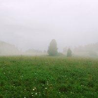 Туман :: Kate Sparrow