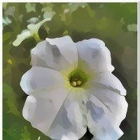 Цветок :: Евгений Кочуров