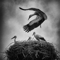 Учимся летать :: Evgeny Kornienko
