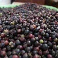 berries :: Тимофеева Ирина