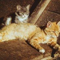 все те же коты:) :: Виктория Шинкаренко