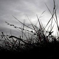 Черно-белое :: Анастасия Е