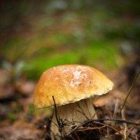 Белый гриб :: Ольга Исупова