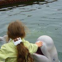 Девочка и дельфин :: Евгений Поварёнков