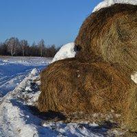 Зима :: Виктория Хромова