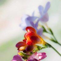 Spring whisper :: Aleksandra Rastene