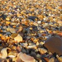 ракушки и камни :: Дарья Селянкина