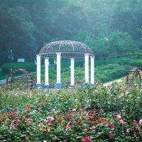small garden :: ruth kan