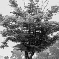 tree :: ruth kan