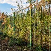 Зелёный забор в лучах вечернего солнца :: Константин Бобинский