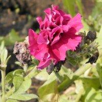 цветока :: Валерия Иванова