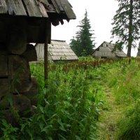 Старая деревня :: Анна Выскуб