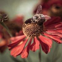 Насекомое на цветке. :: Анна Тихомирова