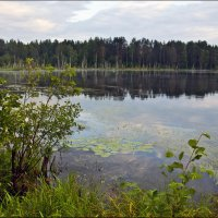 Щучье озеро :: Александр Силинский